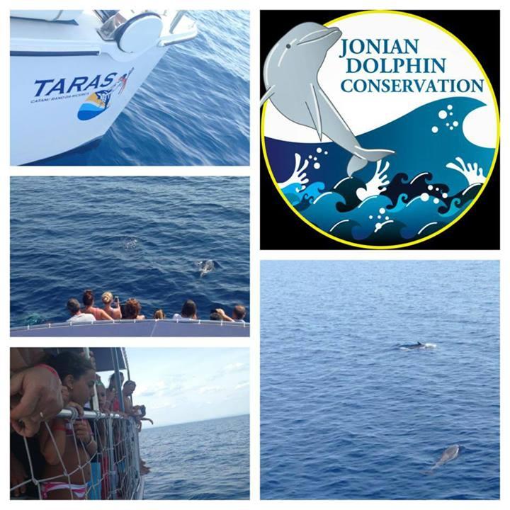 Con Jonian Dolphin Conservation alla scoperta dei delfini