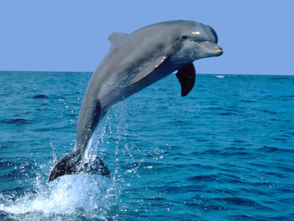 Grazie ad associazioni e commercianti, l'8 giugno a Taranto i delfini erano felici