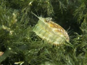 Economie alternative: sperimentati nuovi tipi di allevamento in mare