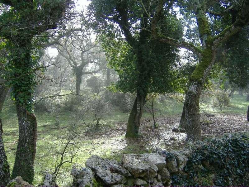 Bosco delle Pianelle: il 3° polmone d'Italia tra Crispiano e Martina Franca