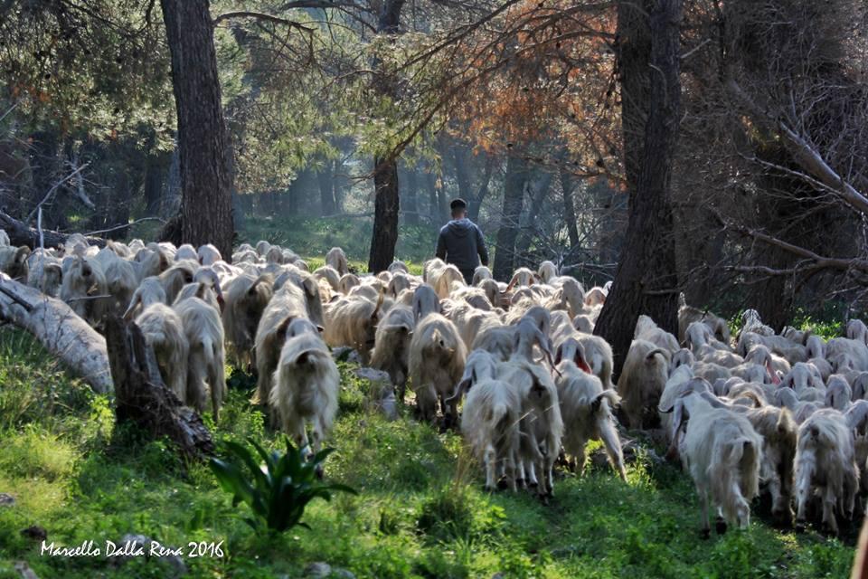 Una giornata da pastore, l'itinerario per rivivere le antiche transumanze