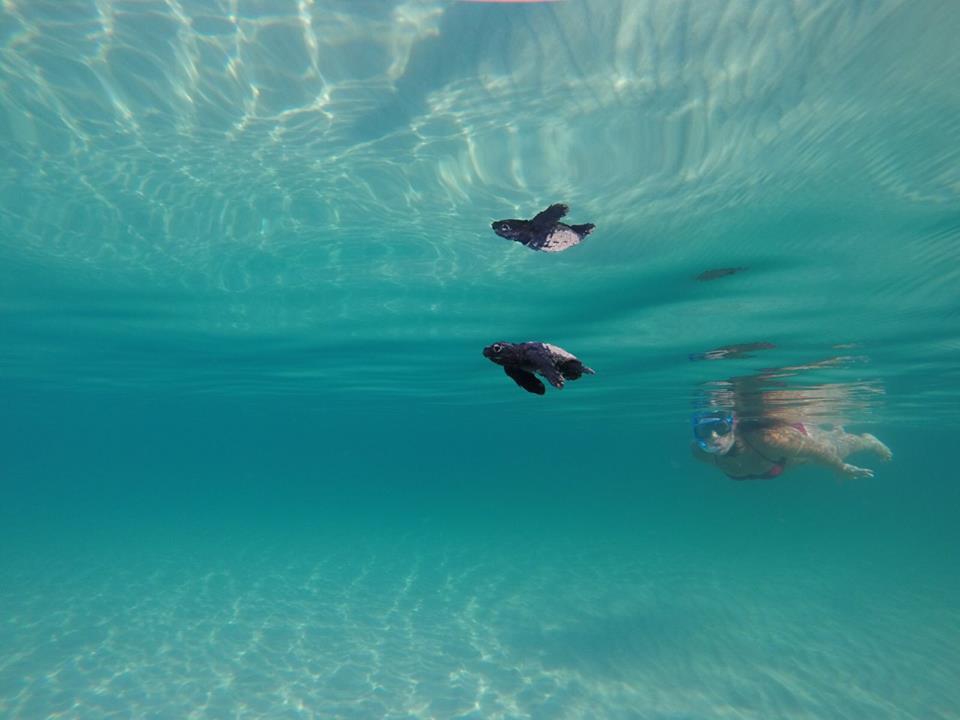 tartarughe Marina di Lizzano - ph Gennaro Alabrese