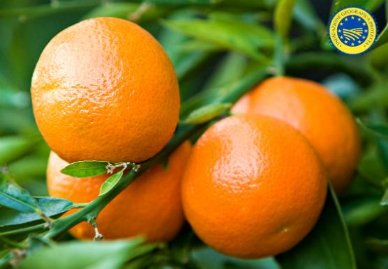 Clementine del Golfo di Taranto: eccellenza Made in Italy!