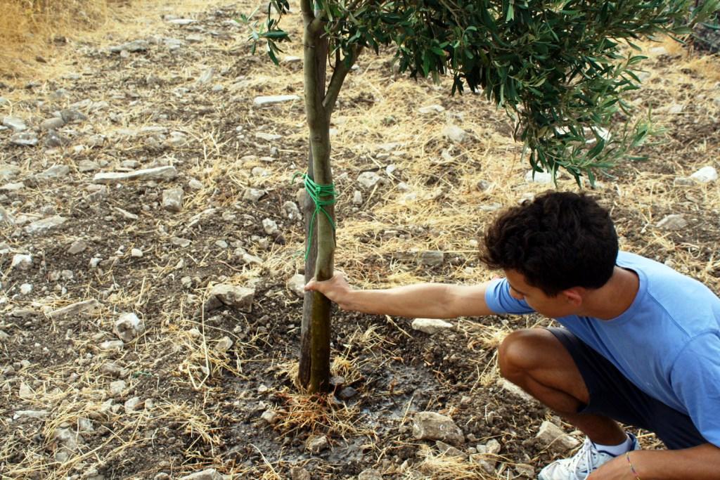 Martedì piantiamo gli ulivi! Poi, anche un orto urbano a Lama