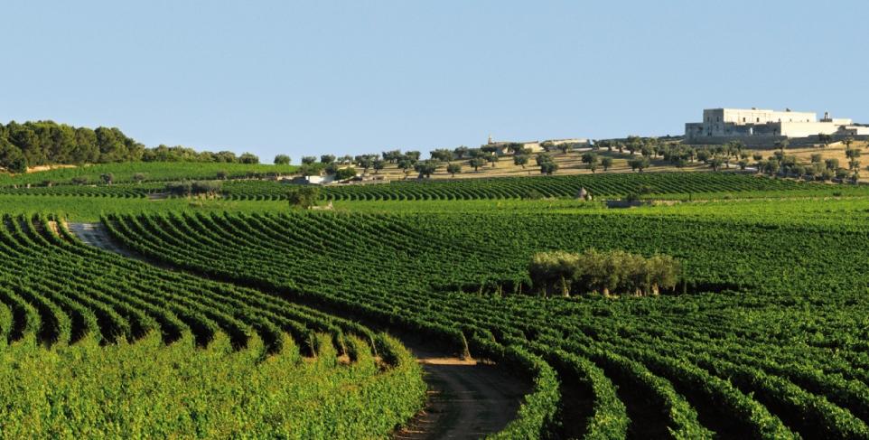 Dal vigneto-giardino più bello del mondo, i vini pugliesi arrivano Gratis in tutta Italia