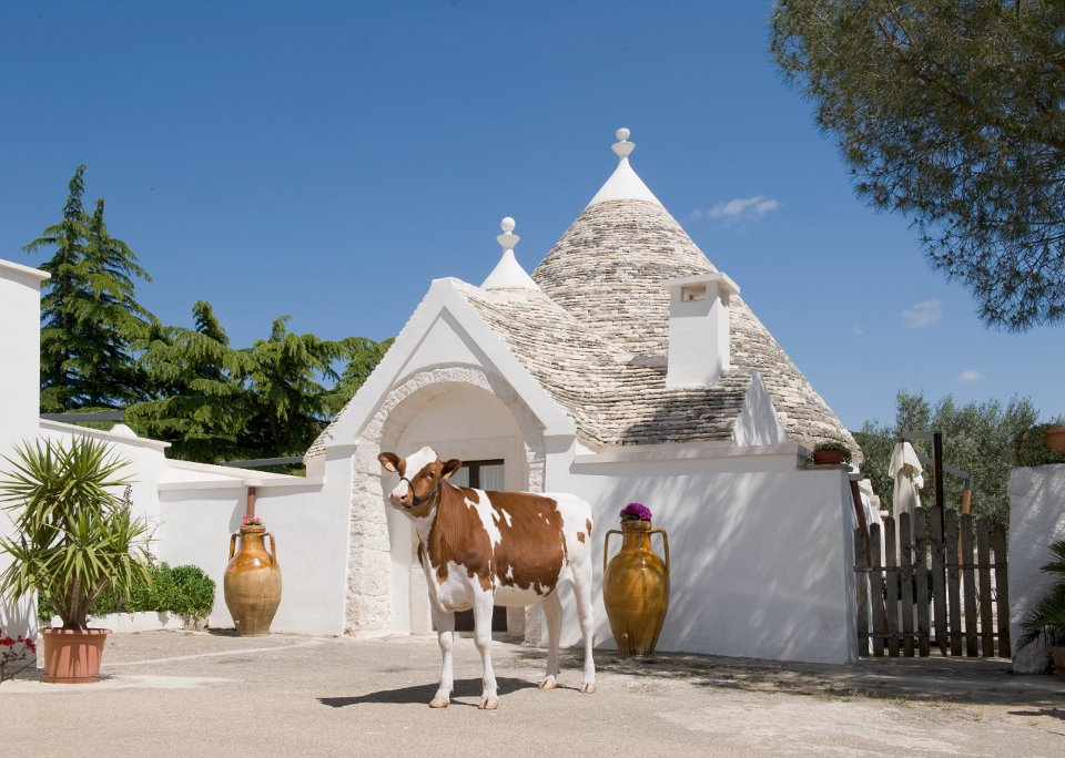 Masseria Pilano con mucca