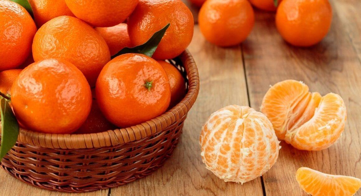 Clementine del Golfo di Taranto: dal 1800, eccellenza di Puglia
