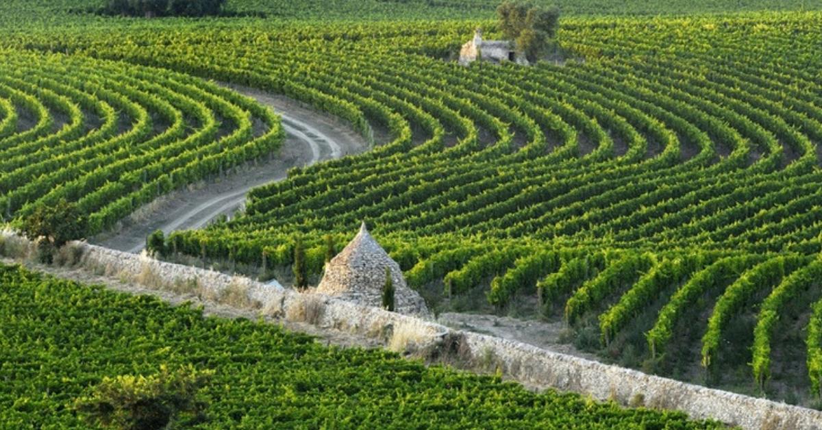 Amastuola, la Masseria con il vigneto giardino più bello del mondo su National Geographic