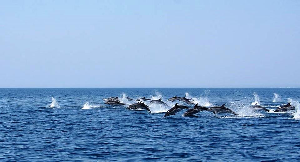 I delfini di Taranto: mare e divertimento per tutti con gli inediti tour turistici