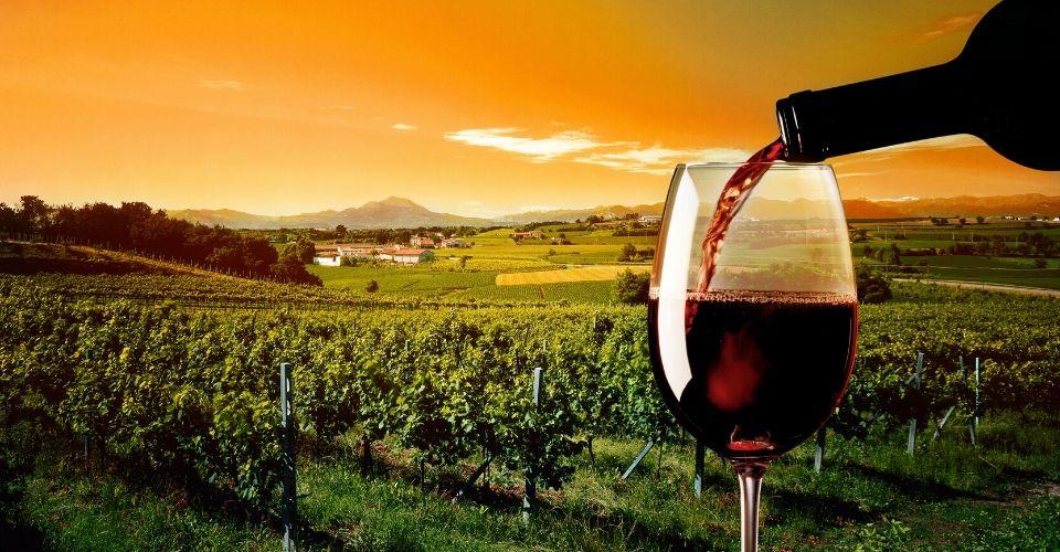 Il vino primitivo che ha più di 3.000 anni è Made in Taranto