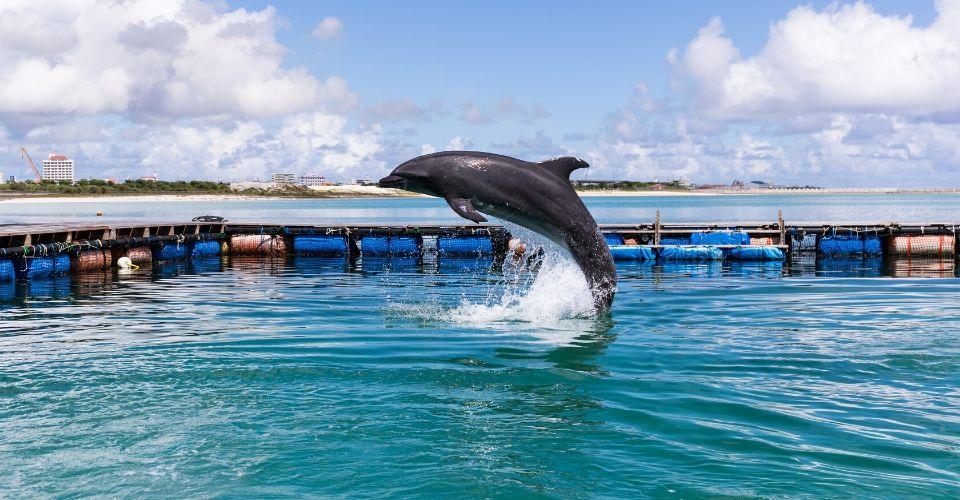 Un «santuario dei delfini» sull'isola di San Paolo a Taranto