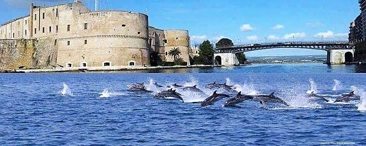 Un'Oasi Blu a Taranto, Città dei Delfini per la salvaguardia dei cetacei